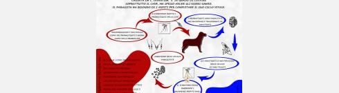 Offerta del mese: prevenzione alla Leishmaniosi canina